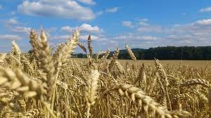 В Нижегородской области строится новый сельскохозяйственный комплекс