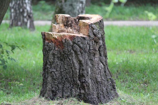 Уникальный городок и ценные деревья: как преобразится парк Пушкина - фото 19
