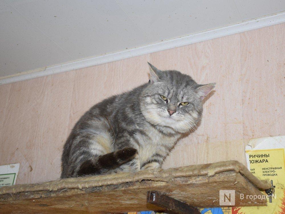 Пять болезней, которые можно подхватить от домашнего кота - фото 3