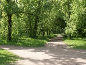 Нижегородцы «вылечат» деревья в парке Кулибина