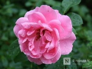 Жара, дожди и грозы придут в Нижний Новгород в выходные