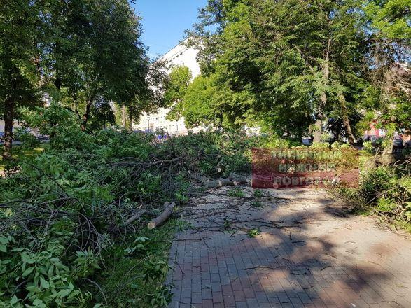 Вырубка деревьев началась в сквере на Звездинке возмутила нижегородцев - фото 2