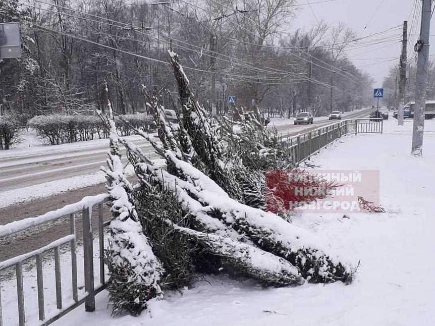 Свалку новогодних елок обнаружили нижегородцы - фото 1