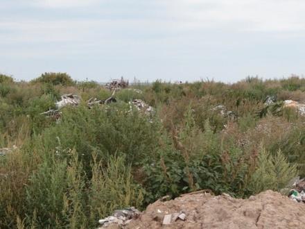 Незаконную свалку на юге Богородска ликвидируют к 2023 году