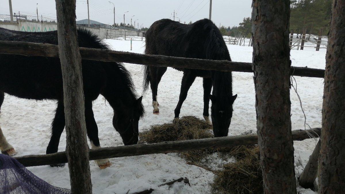 Владелица дзержинского «концлагеря» для лошадей прокомментировала  обвинения в свой адрес - фото 1
