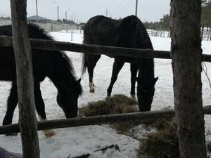 Владелица дзержинского «концлагеря» для лошадей прокомментировала  обвинения в свой адрес