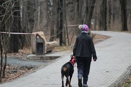 Город с четвероногими: насколько удобен Нижний Новгород для собаководов