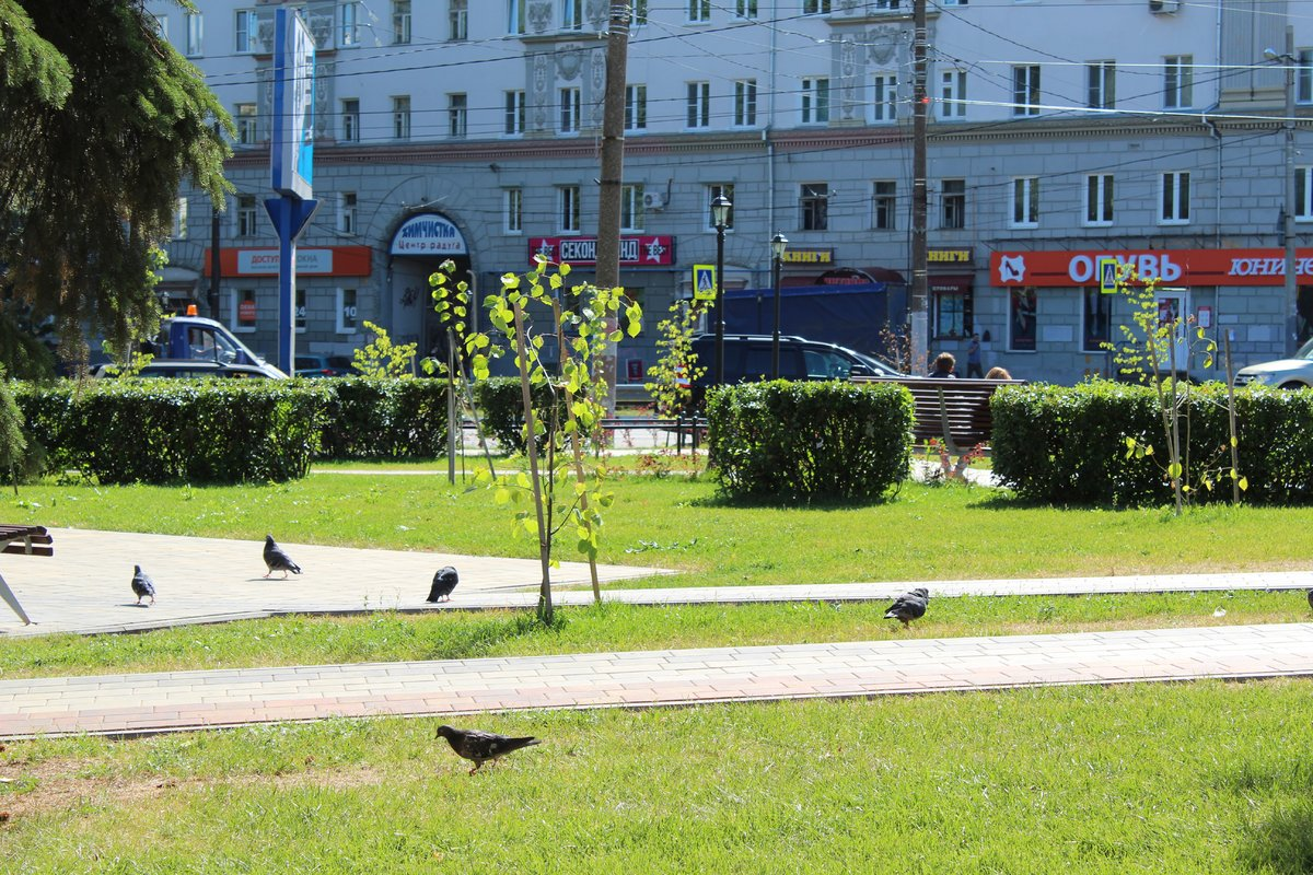 Не прошло и года: нижегородские скверы нужно благоустраивать заново - фото 24