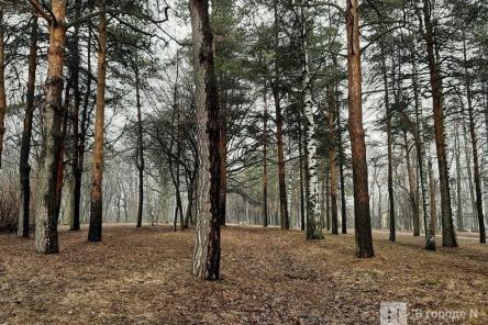 Подрядчика для благоустройства парка «Швейцария» выбирают в Нижнем Новгороде